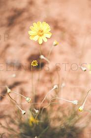 Nature Desert